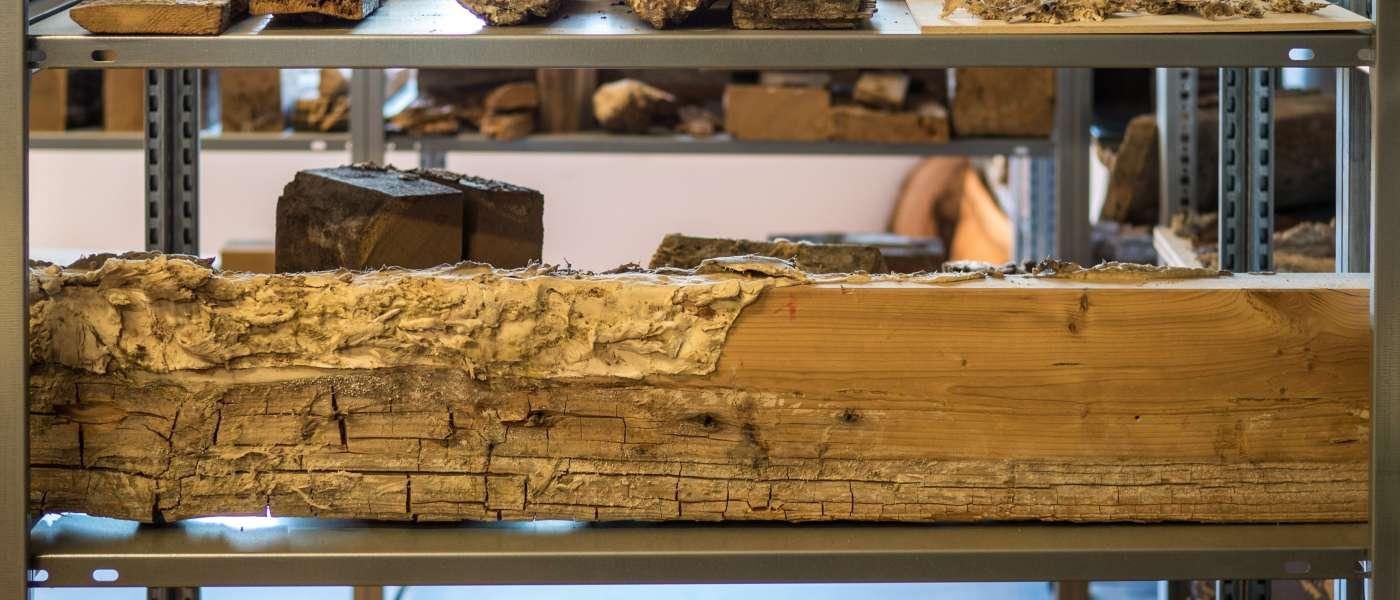 Besuch bei Robert Ott, Sachverständiger für Holzschutz undHolzschäden